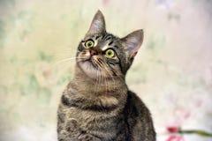Charma den randiga katten arkivfoto