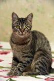 Charma den randiga katten arkivbild