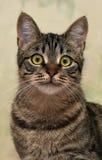 Charma den randiga katten royaltyfria bilder