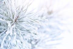 Charma fryste filialer på vinterbakgrund royaltyfri bild