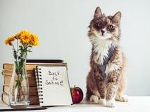 Charmant, grijs, pluizig katje en uitstekende boeken Stock Afbeeldingen