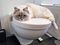Charmante jonge witte kat die op het witte deksel van toilet binnen badkamers liggen stock afbeelding