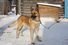 Charmante roodharige hond Stock Foto