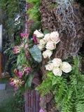Charmante samenstelling met rozenfoto Royalty-vrije Stock Afbeelding