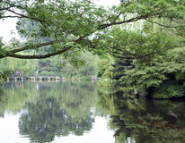 Charmante tuin met bezinning royalty-vrije stock fotografie