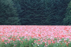 charme de la nature et de la paix Images stock