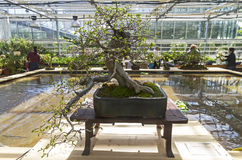 Charme oriental - bonsaï dans le style de et x22 ; Free& x22 ; Image libre de droits