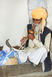 Charmer of snake in India. Indian Snake charmer adult man in turban playing on musical instrument before snake at a basket Royalty Free Stock Photo
