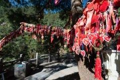 Charmes chanceux chinois accrochant sur un arbre Photo libre de droits