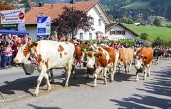 CHARMEY,瑞士- 2018年9月29日:用花装饰的母牛走在Charmey街道上在每年Desalpe节日 免版税图库摄影