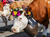 CHARMEY, DIE SCHWEIZ - 29. SEPTEMBER 2018: Kühe verziert mit den Blumen und großen Glocken, die auf die Straße von Charmey an jäh lizenzfreie stockfotos