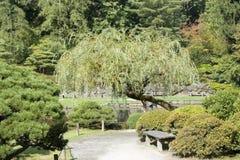 Charmig japanträdgård Arkivbilder