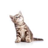 Charmig kattkattunge som ser upp Arkivbilder
