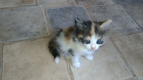 Charmig kattunge royaltyfri fotografi