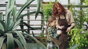 Charmig kvinnlig garderner och hennes lilla dotter använder minnestavlan, medan arbeta i växthus tillsammans modernt stock video