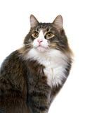 Charmig ung katt Arkivbild