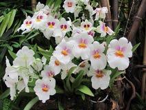 Charmig vit orkidé Blommor Royaltyfri Foto