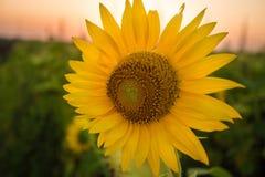 Charmigt landskap av solrossoluppgång Royaltyfria Foton