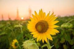 Charmigt landskap av solrossoluppgång Arkivfoton