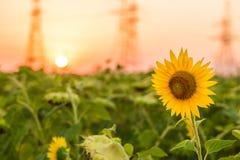 Charmigt landskap av solrossoluppgång Royaltyfria Bilder