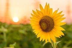 Charmigt landskap av solrossoluppgång Arkivbild