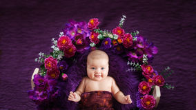 Charming baby in basket with flowers, purple background Royalty Free Stock Photos