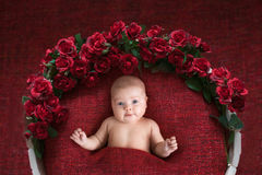 Charming baby in basket with flowers, red background Royalty Free Stock Photo