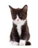 Charming black-and-white kitten. Sitting isolated on white Stock Photos