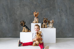 Charming blond boy and five little Yorkshire terriers. royalty free stock photos