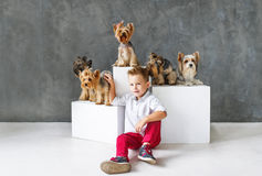 Charming blond boy and five little Yorkshire terriers. royalty free stock photography