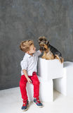 Charming blond boy and five little Yorkshire terriers. stock images