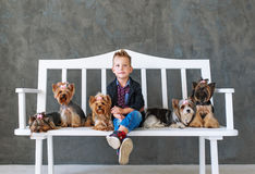 The charming blond boy sits on a white bench in an environment of five little Yorkshire terriers stock image