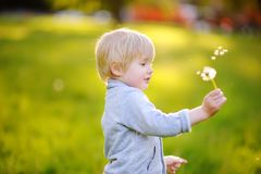 Charming blonde little boy blowing dandelion flower on sunny summer day. Charming blonde little boy playing with dandelion flower on summer day. Kids having fun Stock Image