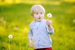 Charming blonde little boy blowing dandelion flower on sunny summer day. Charming blonde little boy playing with dandelion flower on summer day. Kids having fun Stock Photography