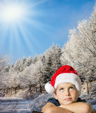 Charming boy and snow-covered Christmas forest Stock Photos