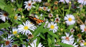 Charming butterfly and beautiful flowers against the background of grass Royalty Free Stock Photography