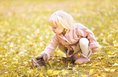 Charming child in autumn Royalty Free Stock Image