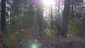Charming cute young caucasian woman walking in fall forest at sunrise. Yellow and red leaves. Beautiful autumn. Attractive woman w stock video footage