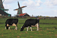 Charming Dutch pastoral Stock Photo