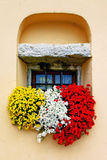 Charming floral compositin with vivid flowers. window decoration Royalty Free Stock Photos