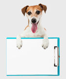 Charming friendly smile dog with office tablet Stock Photography