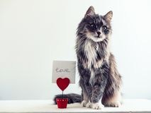 Charming, furry cat Stock Images