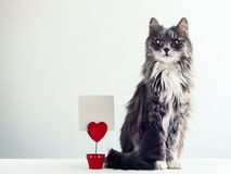 Charming, furry cat royalty free stock images