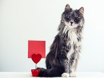 Charming, furry cat Royalty Free Stock Photography