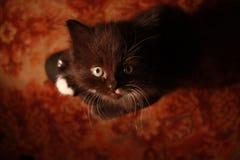Charming furry creature stock photo