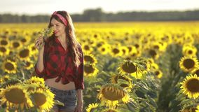 Charming girl smelling sunflower blossom in field stock video