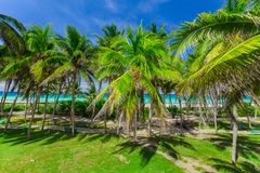 Charming gorgeous  view of tropical palm garden leading to the beach and tranquil turquoise ocean on blue sky background Royalty Free Stock Image