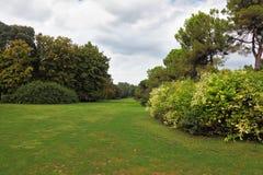 Charming green grass lawn Royalty Free Stock Photos