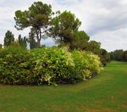 Charming green lawn Stock Photo