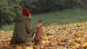 Charming woman and her dog posing in autumn park stock video